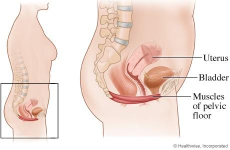 vir: http://www.webmd.com/women/pelvic-floor-muscles